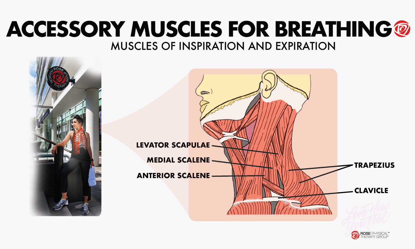 accessory muscles for breathing physical therapy
