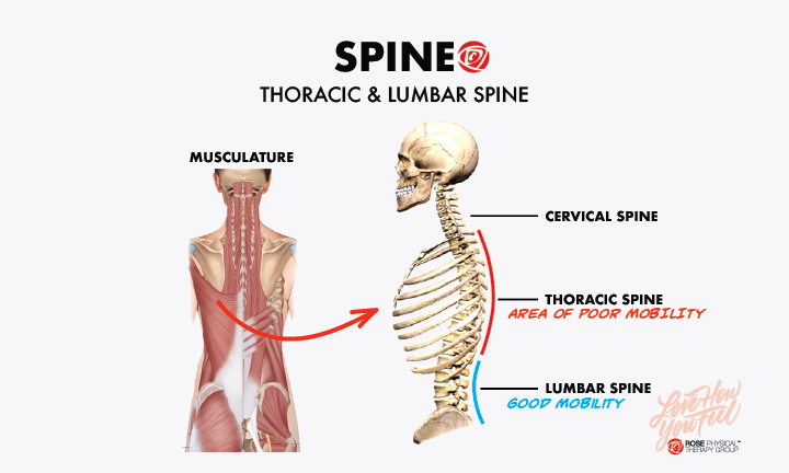 Improving Thoracic Spine Mobility For Rowers Rose Physical Therapy