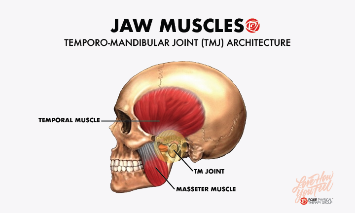 Treating Tmj With Trigger Point Dry Needling Physical Therapy